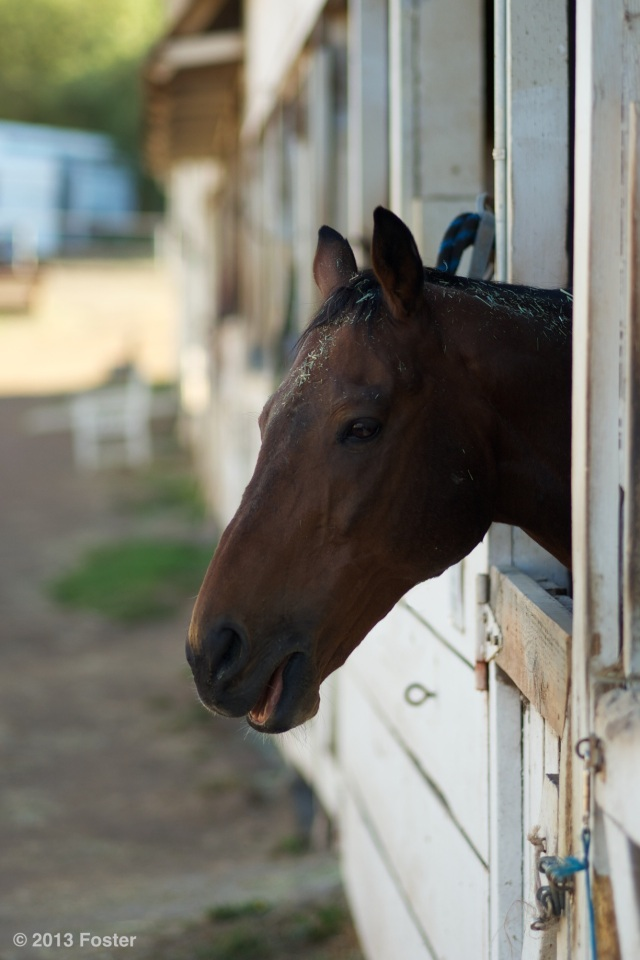 Presidio Horse