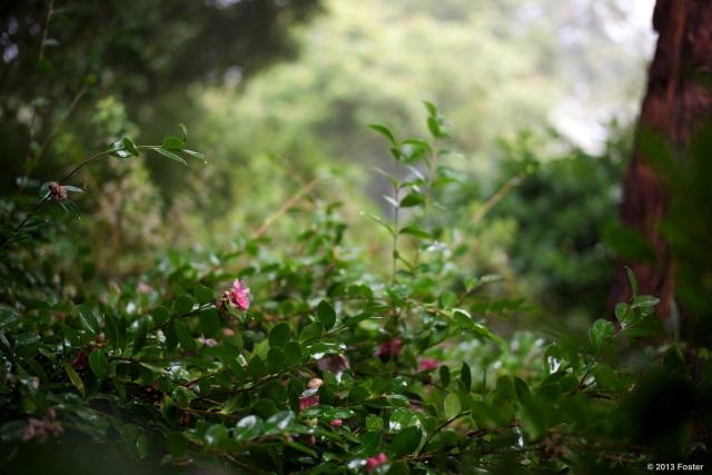 Garden flower in the rain