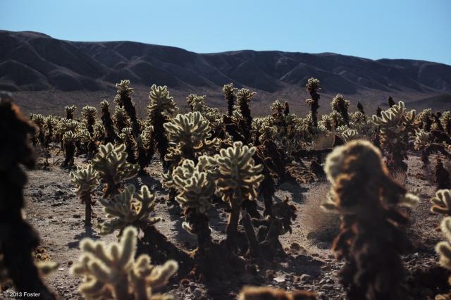 Cacti basking in the sun...
